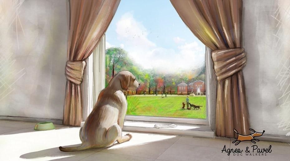 "собака, смотрящая окно ""width ="" 2000 ""height ="" 1115"