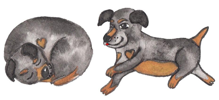 "симпатичная иллюстрация щенка ""width ="" 1914 ""height ="" 878"