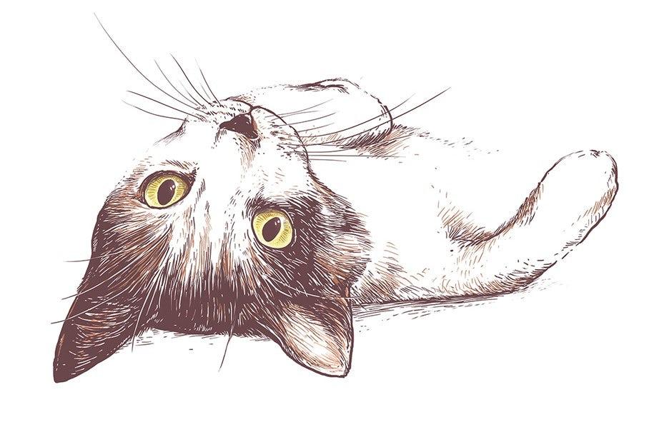 "Иллюстрация кошки ""width ="" 922 ""height ="" 591"