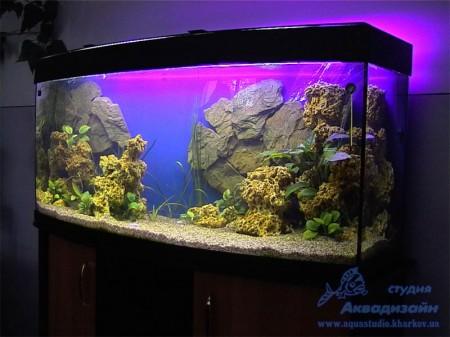 оформление аквариума для золотых рыбок
