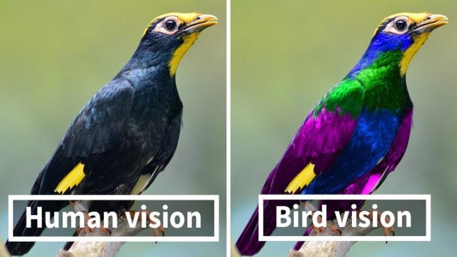 """бок о бок с точки зрения птицы в сравнении с """"шириной ="""" 1200 """"высоты человека ="""" 675"""