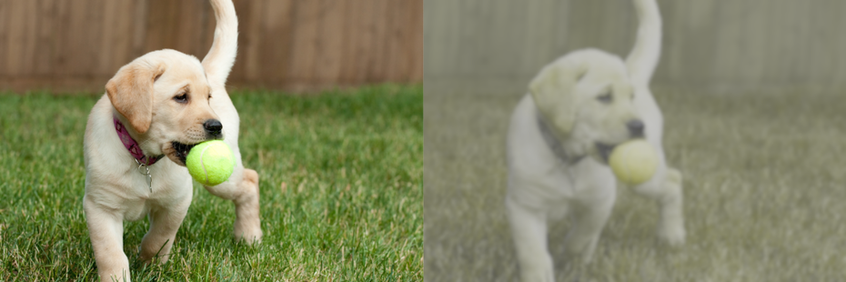 """бок о бок визуально точка зрения собаки против человека, смотрящего на щенка с мячом """"width ="""" 1116 """"height ="""" 372"""
