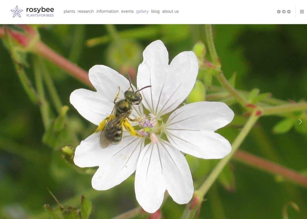 Портфолио логотипа и мономерка для растений RosyBee для пчел Логотип Дизайн логотипа Смит