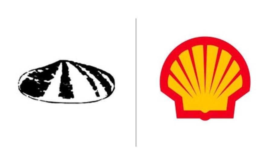 """Примеры эволюции логотипа Shell """"width ="""" 900 """"height ="""" 526 """"/>    <figcaption> Развитие логотипа Shell с 1900 года по сегодняшний день </figcaption></figure> <p> Давно прошли времена буквальных логотипов , где компания Shell могла просто использовать двусмысленную иллюстрацию морской ракушки, и этого было достаточно, чтобы удовлетворить потребителей. Эта оригинальная раковина датируется 1900 годом, и только в 1904 году мы видим что-то узнаваемое в сегодняшней версии. </p> <figure data-id="""