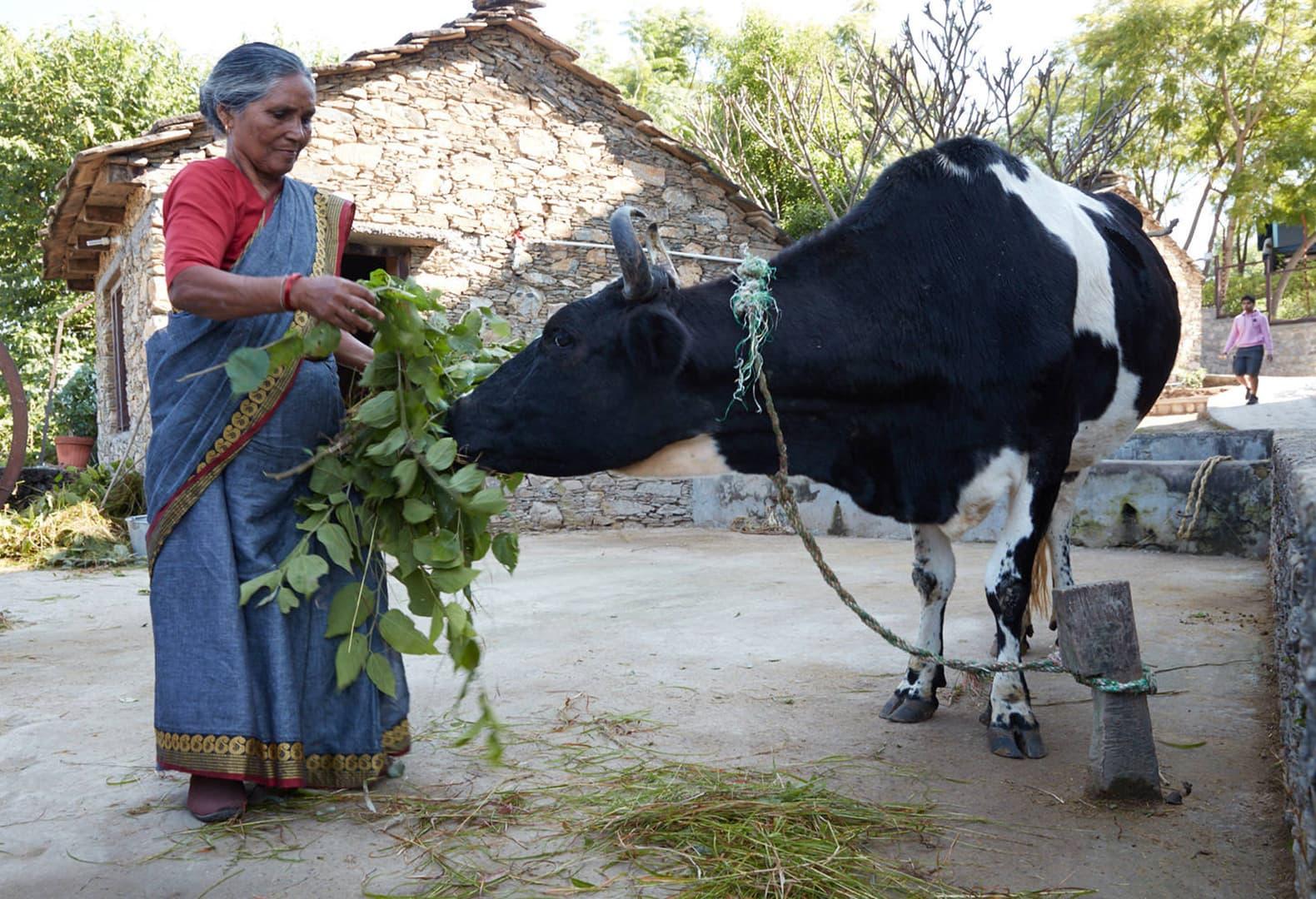 Новый объект для коммьюнити индийской деревни Лодси и компании Forest Essentials. Фото: Morphogenesis